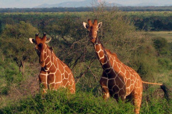 Ostafrika Reisen