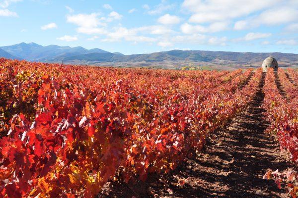 La Rioja (2)