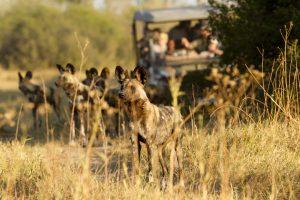 Ostafrika Rundreisen