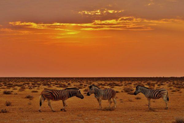 Beobachten Sie die Tiervielfalt Namibias auf Ihrer Individualreise.
