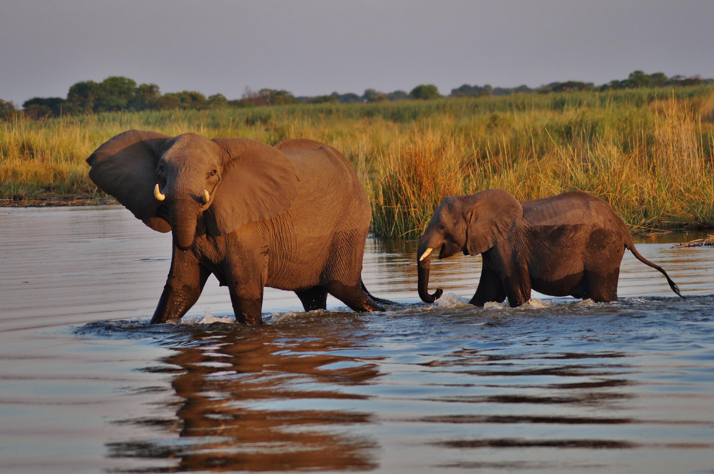 Sunway Botswana Chobe (Alex Peyer) DSC05674