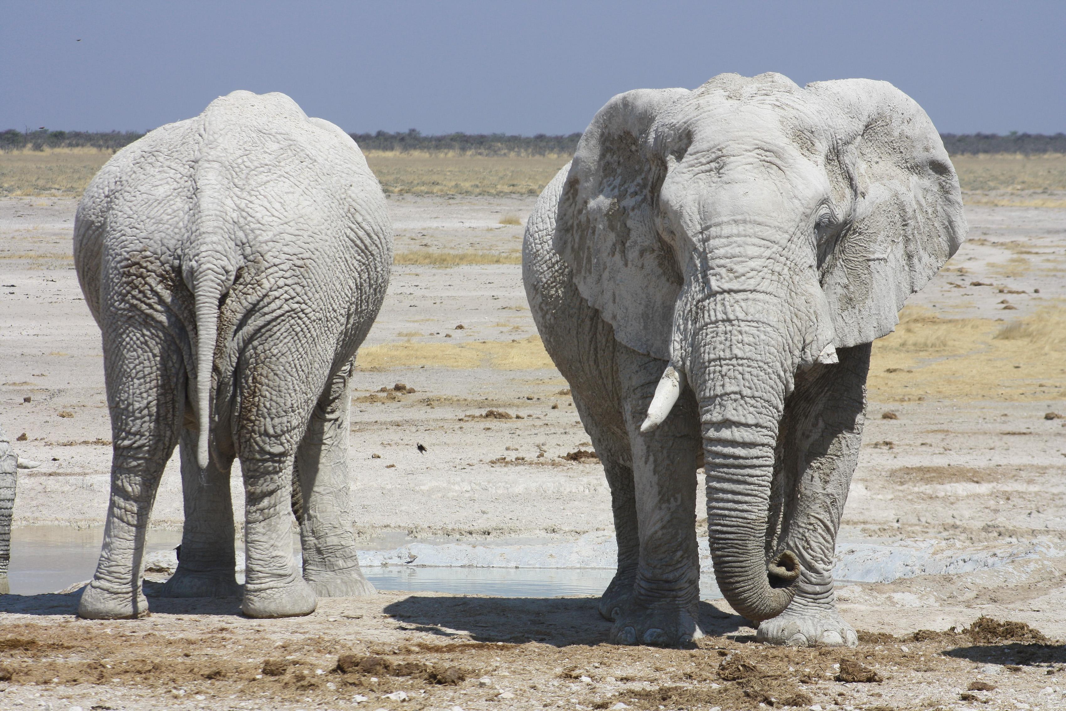 Sunway Namibia Etosha elephants 3 (Michieu Lourens)
