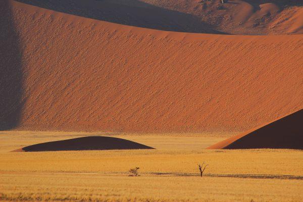 Hohe Sanddünen erwarten Sie auf Ihrer Namibia Safari