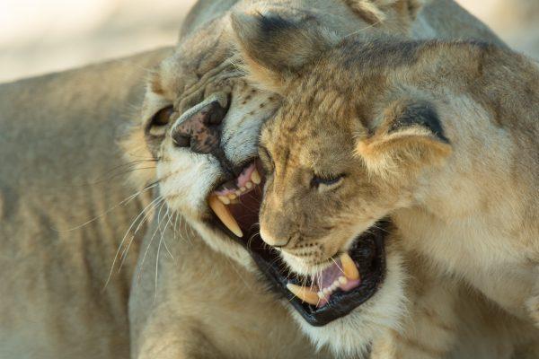Bestaunen Sie die beeindruckende Tierwelt!