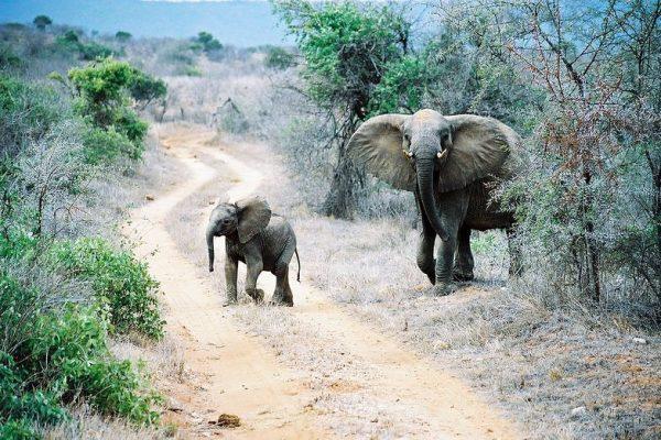 Freuen Sie sich auf eine atemberaubende Tierwelt während Ihrer Rundreise durch Kenia und Ostafrika