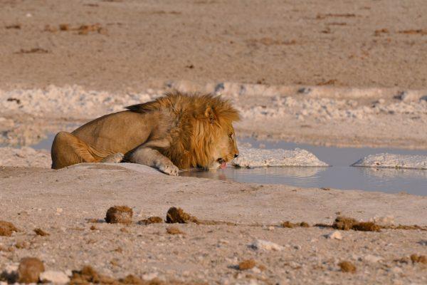 Namibia Urlaub, Rundreisen, Autoreisen