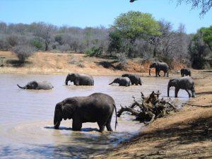 sued-Kapama-Elefanten