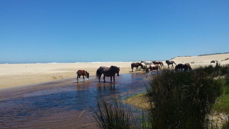 Individualreisen Südafrika