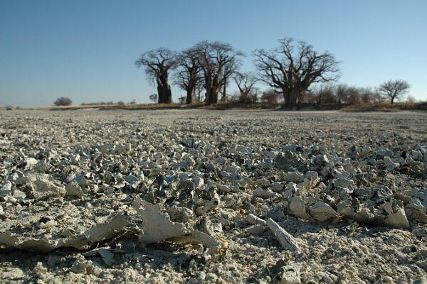 Unglaubliche Landschaften können Sie auf Ihrer Botswana Autoreise entdecken.