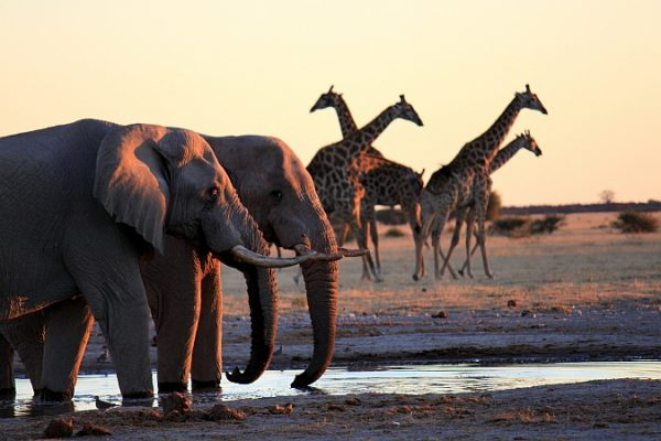 Betrachten Sie die großartige Tierwelt aus nächster Nähe!