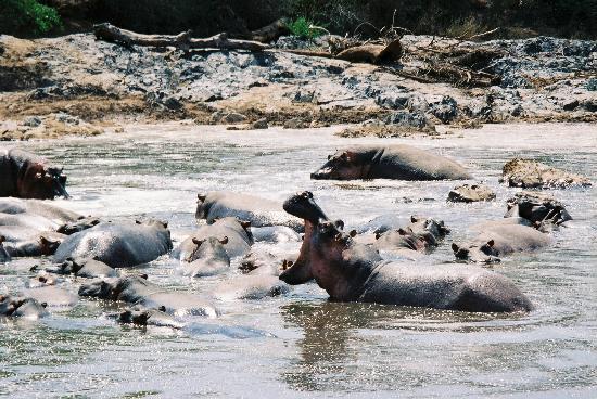 tansania_serengeti2