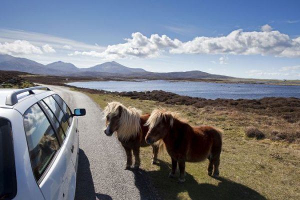 Shetland Ponies at Loch Druidibeg National Nature Reserve, Isle of South Uist, Outer Hebrides.